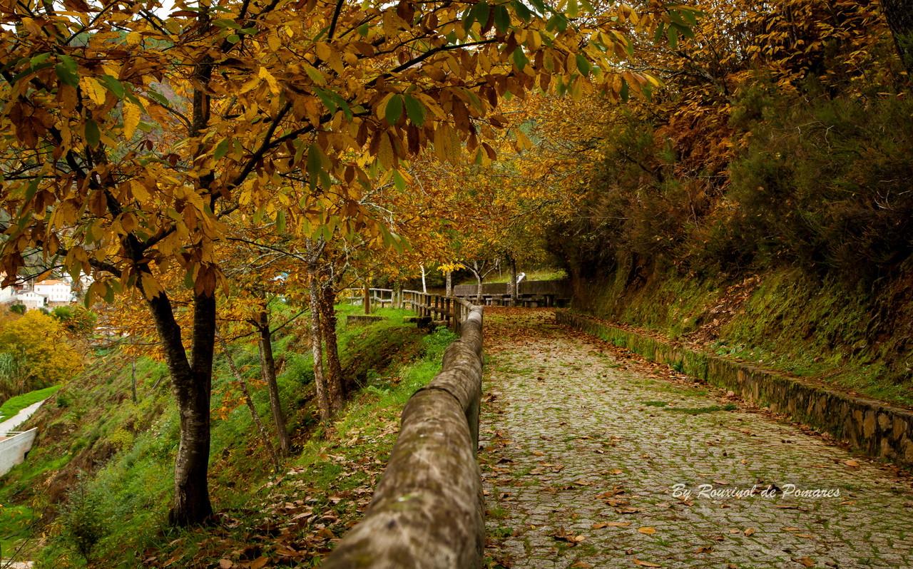 Outono em Pomares (6).JPG