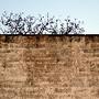muro1.jpg