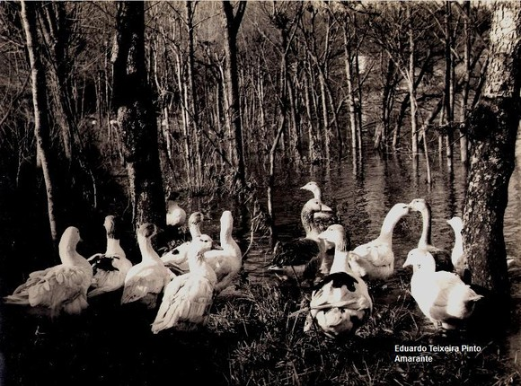 1 - Reunião dos patos
