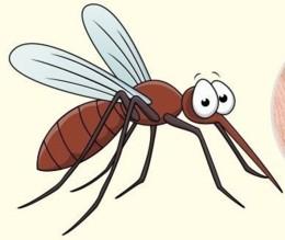 picadas-de-insetos-5.jpg
