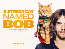 A-Street-Cat-Named-Bob-533x400.jpg