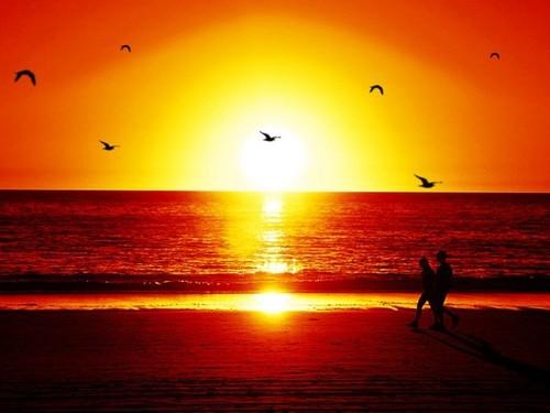 Resultado de imagem para passear ao sol