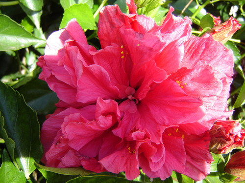 flores jardim do mar : flores jardim do mar:FLORES DO MEU JARDIM-OUTONO – miilay