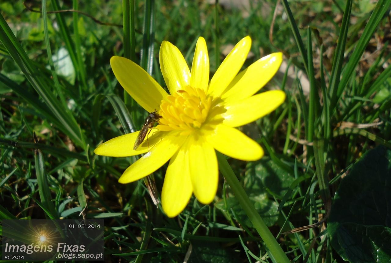 Um pequeno insecto sobre uma flor