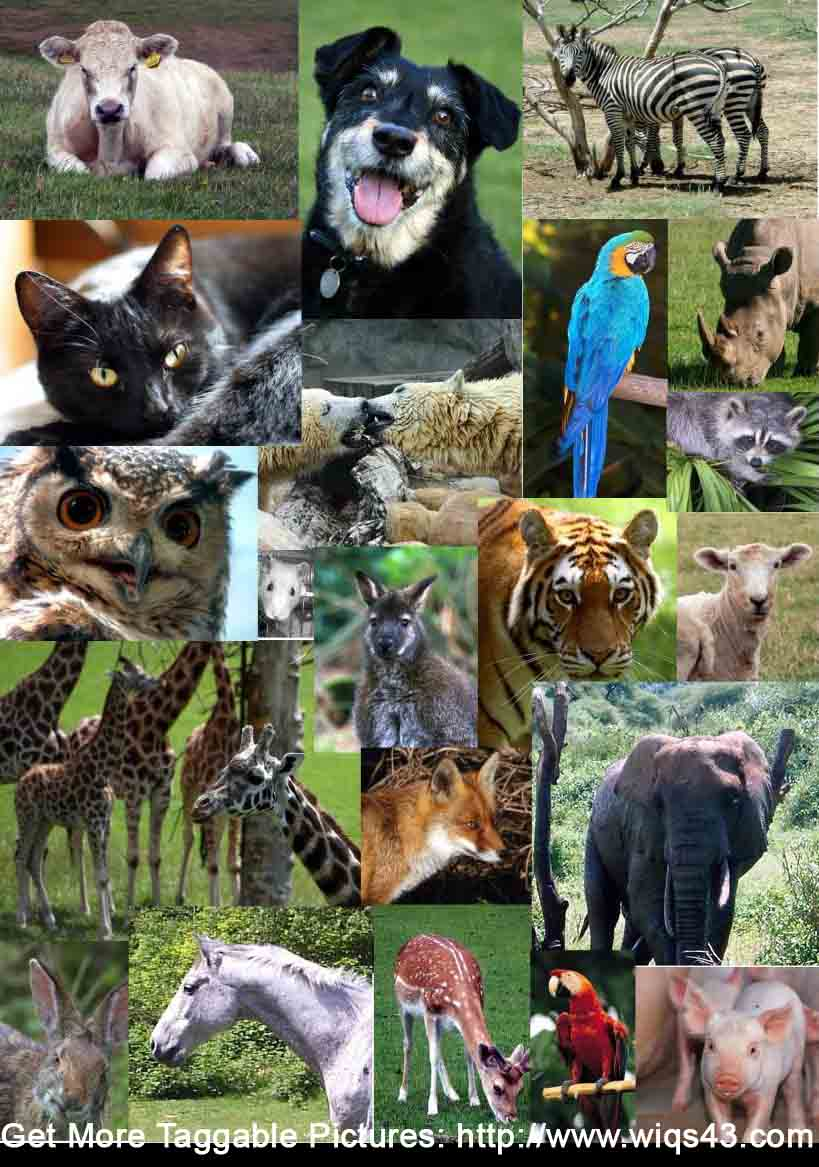 animais identificar fotos facebook meme tag amigos