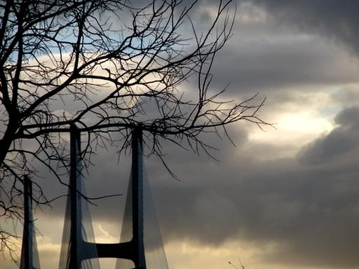 ponte desfolhada