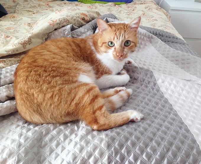 gato-acacio-7